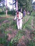Spraying herbicides