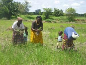 Malawian women weeding fields with their children